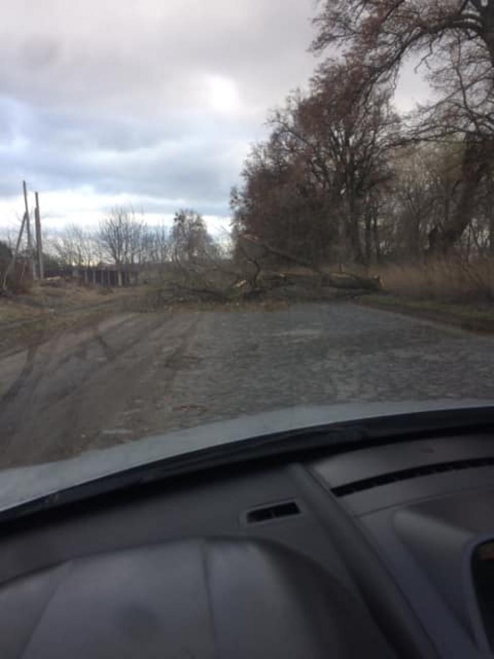 Дерево впало на дорогу (фото Миколи Корнійчука)