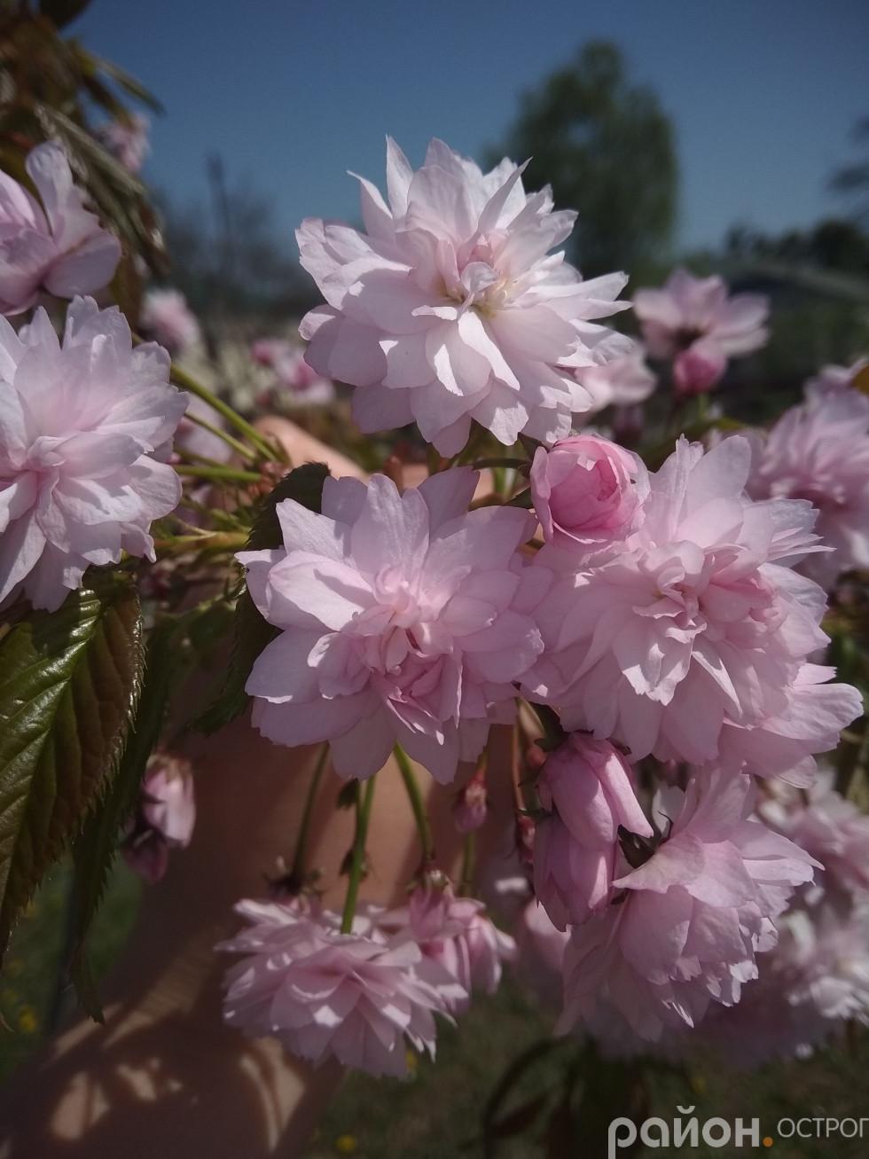 Буяння квітів