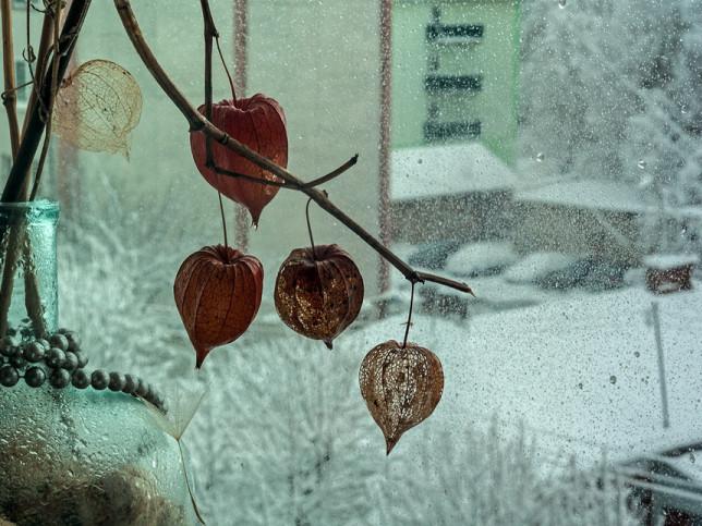 Фото Галини Вокальчук