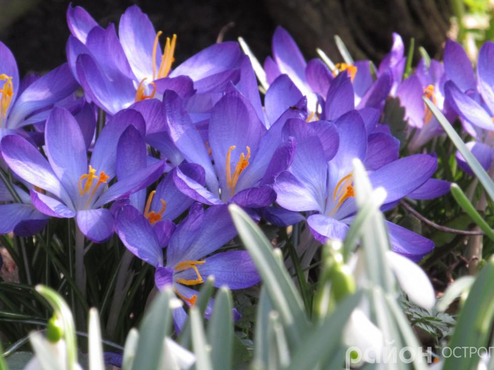 Весна вирує барвами