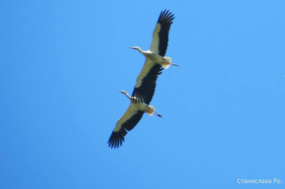 Пара птахів у небі