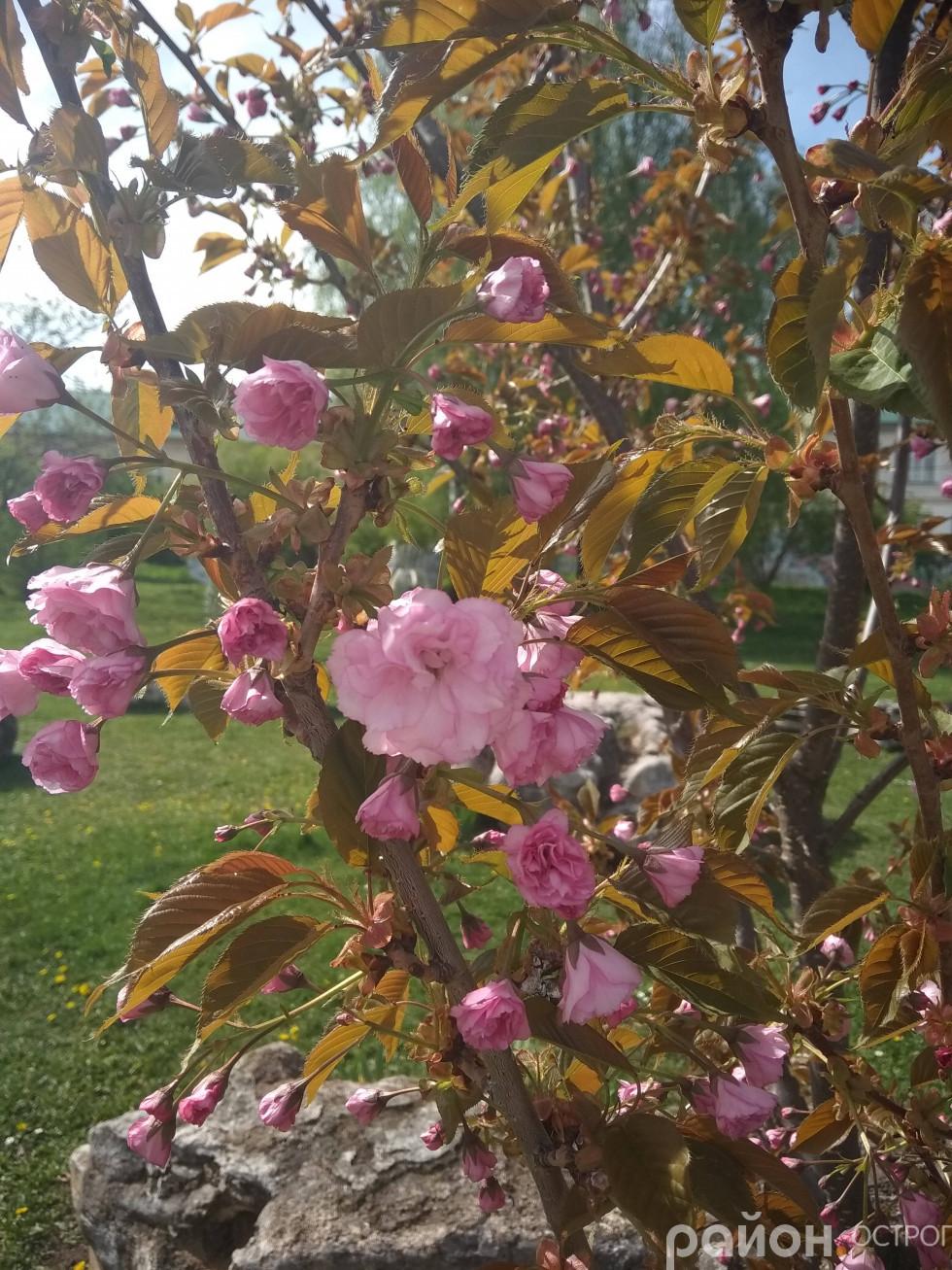 Ніжні квіти милують око
