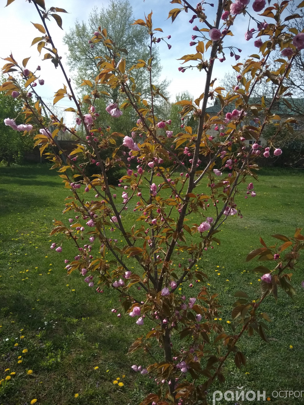 Деякі дерева тільки-тільки починають квітнути