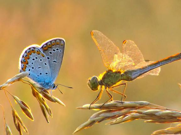 Фото Ogiros