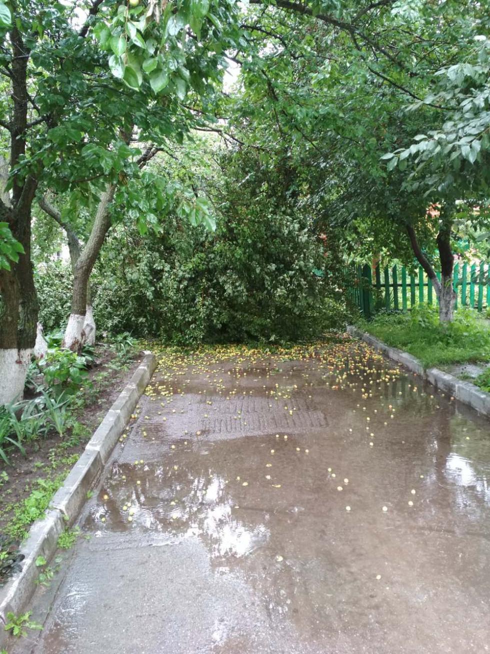 Дерево перекрило виїзд на проспекті Незалежності