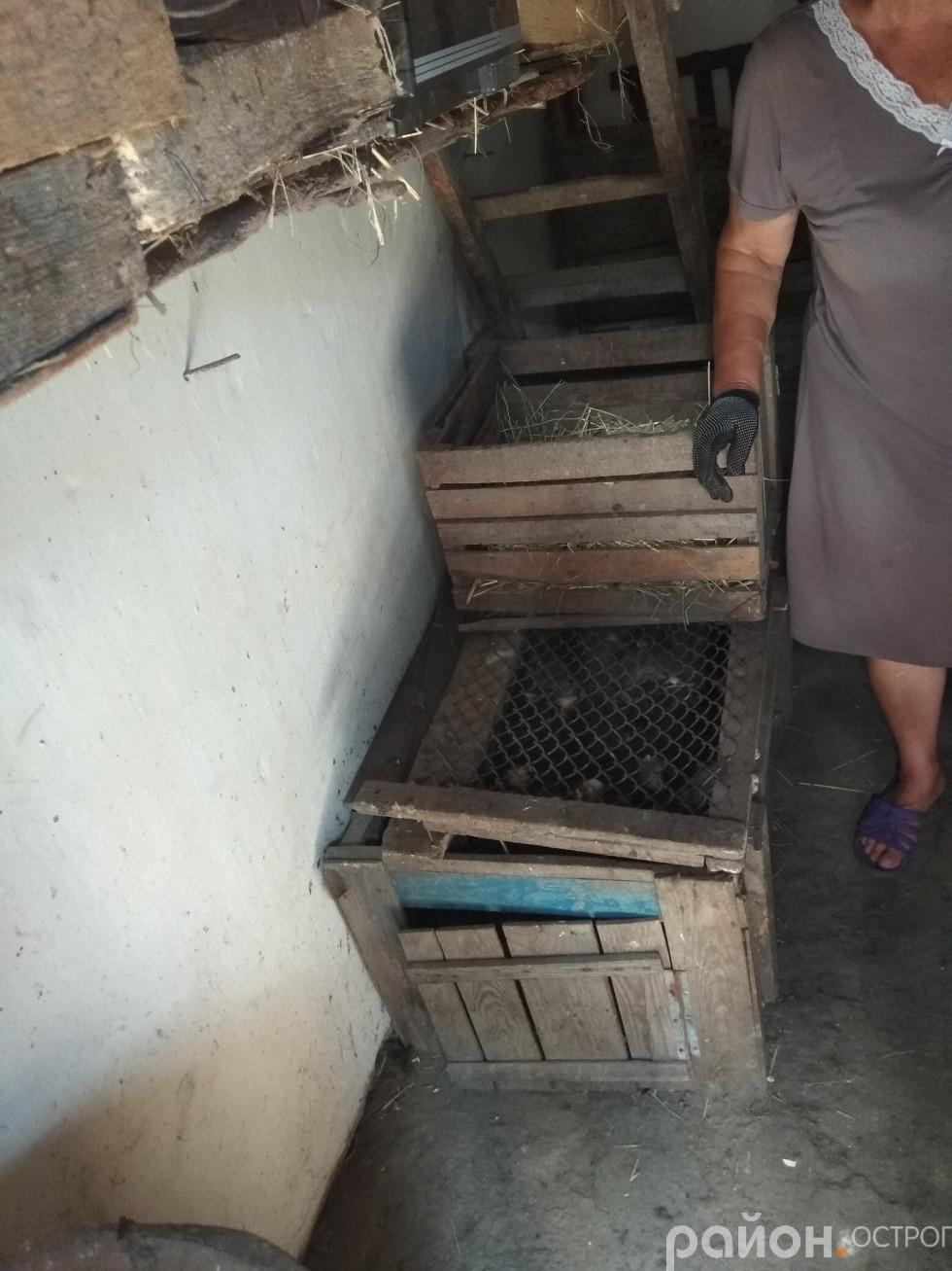 Те, чим накритий ящик, було скинуто, а курчата витягнуті й задушені