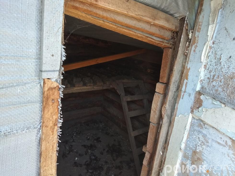 У курнику Антоніни Ковш непроханий гість відірвав планку від стелі (загальний вигляд)