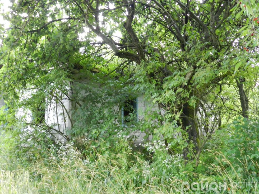 Покинутий будинок та садок